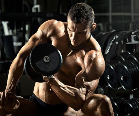 Quel est le meilleur entraînement de masse?