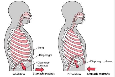bracing vs breathing